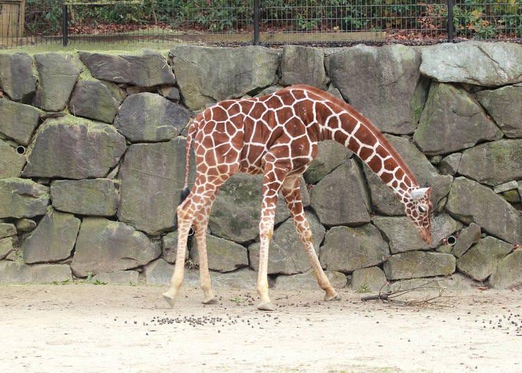 8. Visit Zoorasia for Some Animal Fun