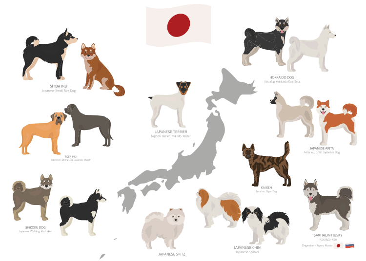 Other Japanese Dog Breeds