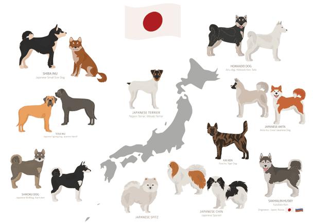 Other Japanese Dog Breeds