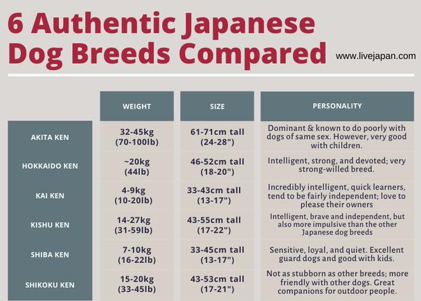 Wrap Up: Japanese Dog Breeds