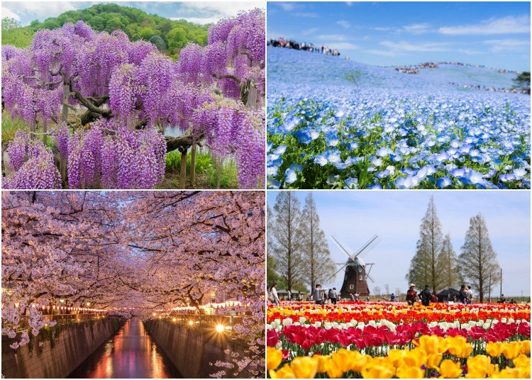 20 Beautiful Japanese Flowers and When & Where to See Them! (2021 Edition)