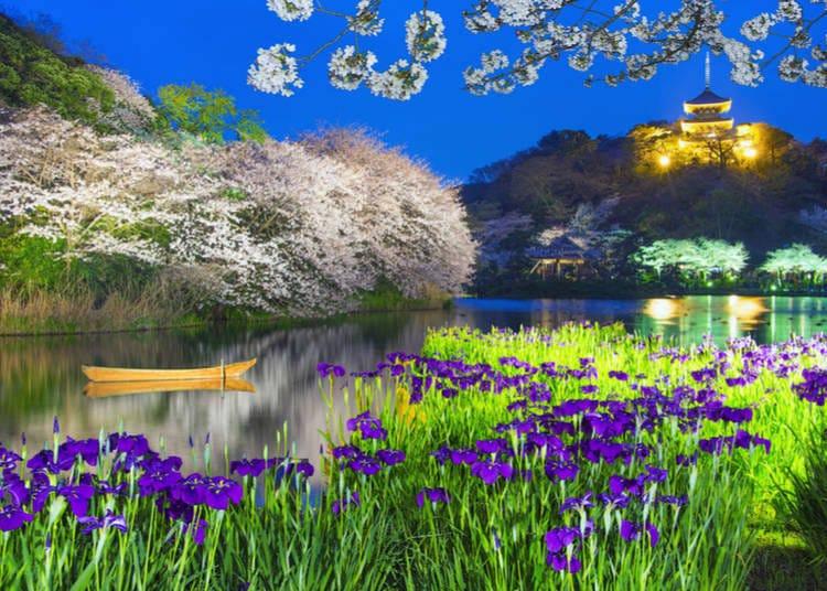 What flowers bloom in Summer in Japan 2019