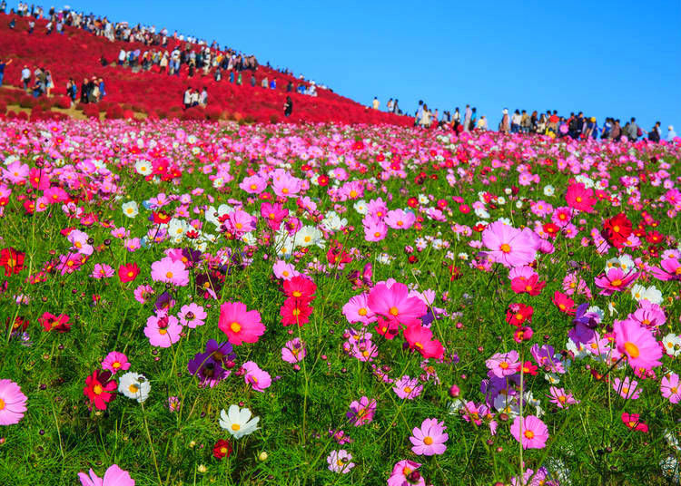 Flowers that bloom in Autumn 2020 in Japan