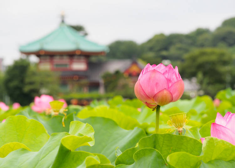 Japanese Flower Guide Where To See Flowers In Japan During Any