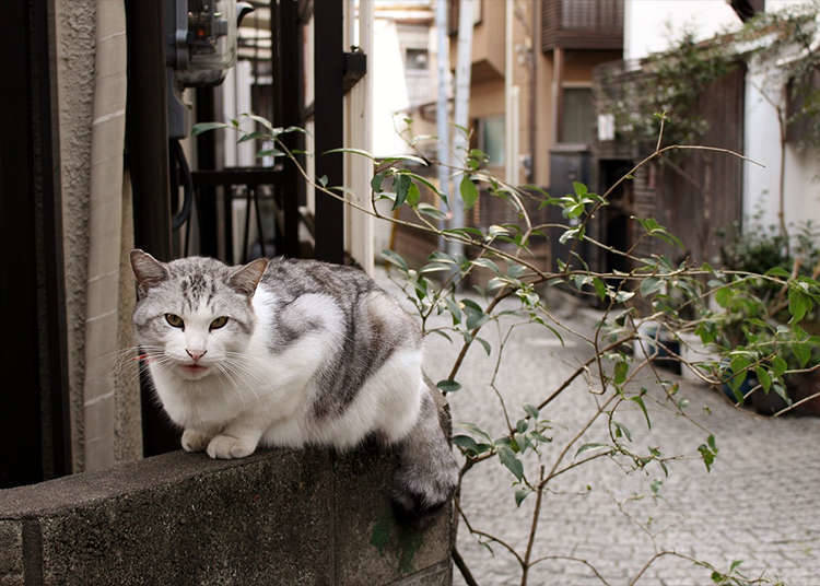 Reason No. 9 – Encounters of the Feline Kind