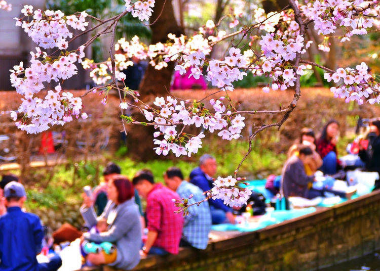 Where to Dine When a Picnic Space Can't Be Found