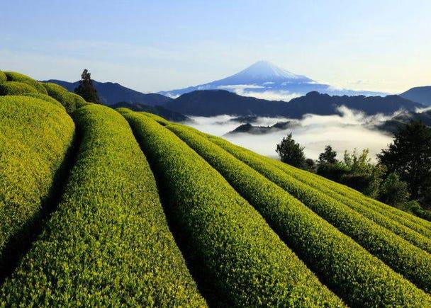 6. Green Tea (Shizuoka)