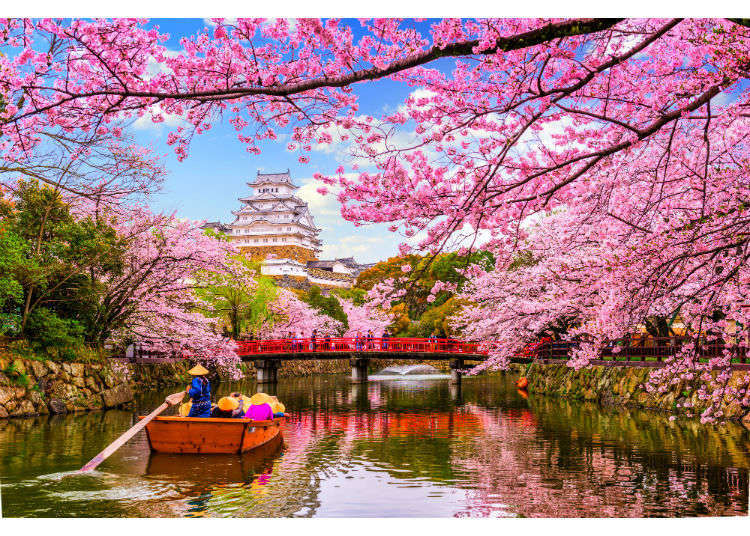 These 20 Weird Facts About Japanese Cherry Blossom Trees Will Make You Feel Instantly Smarter Live Japan Travel Guide