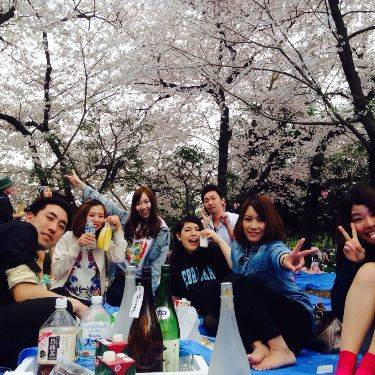 Come to a Cherry Blossom Viewing Picnic in Central Tokyo