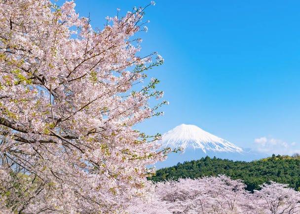 Visiting Japan in Spring