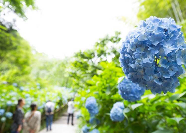 Hydrangeas, Autumn Leaves, and More – Any Season is Worth the Visit