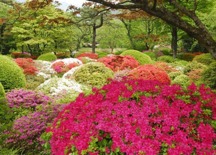 A Museum and Autumn Foliage Spot Right Next to Mikawaya Ryokan