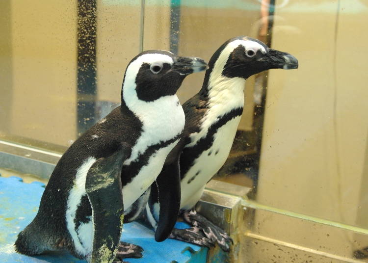 2. Share a drink with some penguins!? (Ikebukuro)!