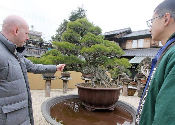Million Dollar Bonsai How To Tell A Bonsai Legend Apart Live Japan Travel Guide