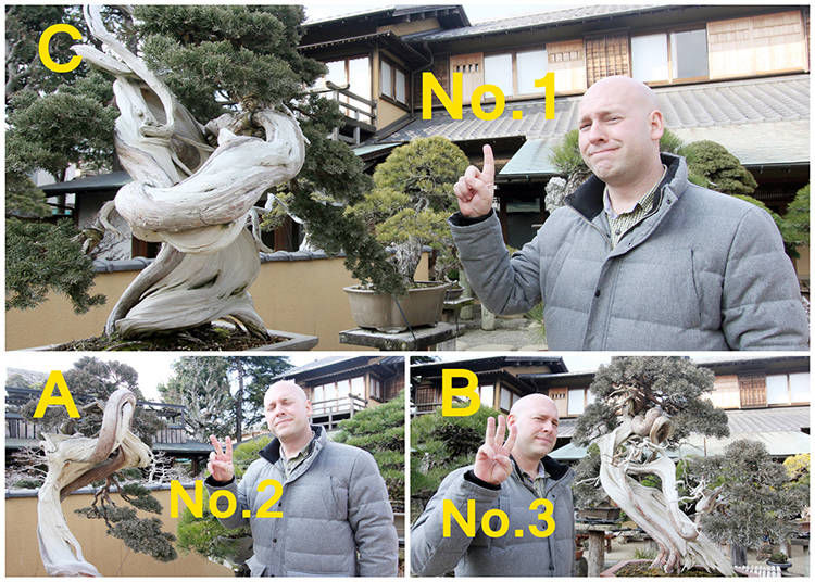 This is Timothy's Top Bonsai Pick!