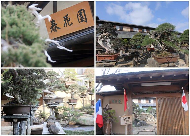 The World of Bonsai at Shunka-en Bonsai Museum