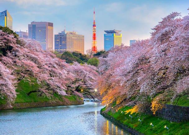 在日本才看得到!東京四季的遊玩方法