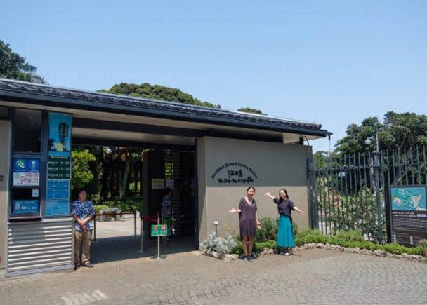 登上「江之島海蠟燭」,擁抱360度絕景♪天氣好的話,還有富士山相伴唷!