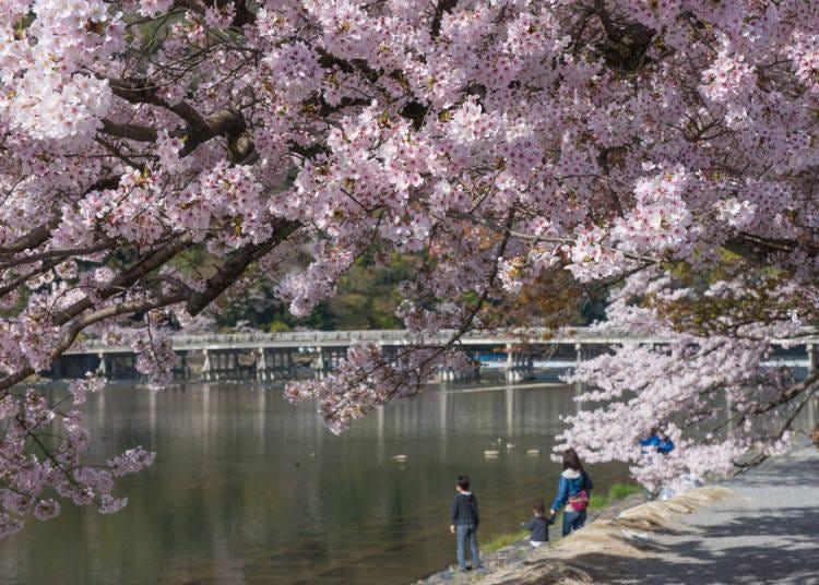 뿌연 탕. 피부 미용 성분 포함! 교토 아라시야마……단순 온천수