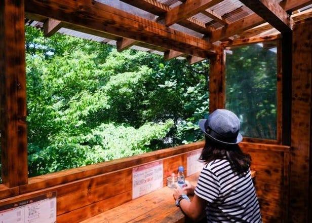 高尾山一日遊!絕景、美食、溫泉等,樂趣滿滿