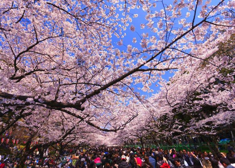 Sakura Photo Tips #4. Plan around people