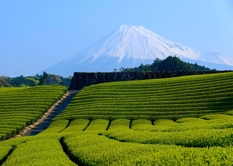 9. Is it True That Mount Fuji Has a Front and Backside?