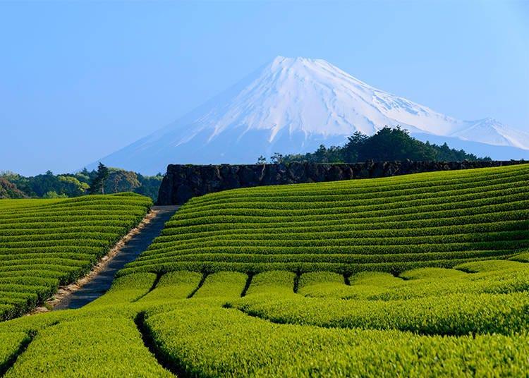 認識富士山⑧富士山有分正面與背面,是真的嗎?