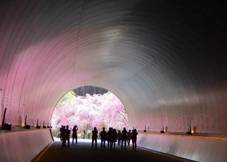 ◆ 49位 ミホ ミュージアム(滋賀県)
