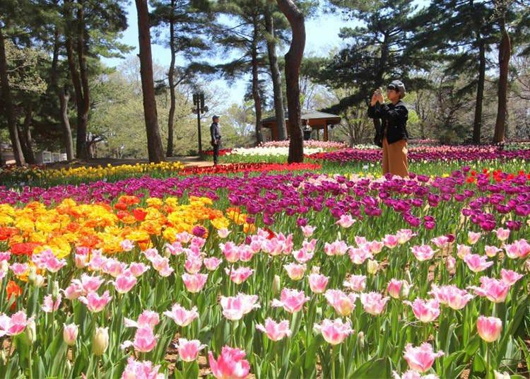이곳에서 봄에만 볼 수 있는 다른 꽃들