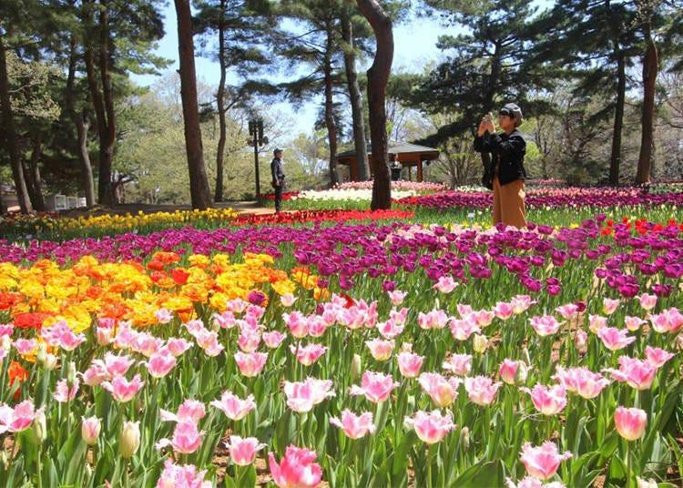 其他春季花卉也不能錯過
