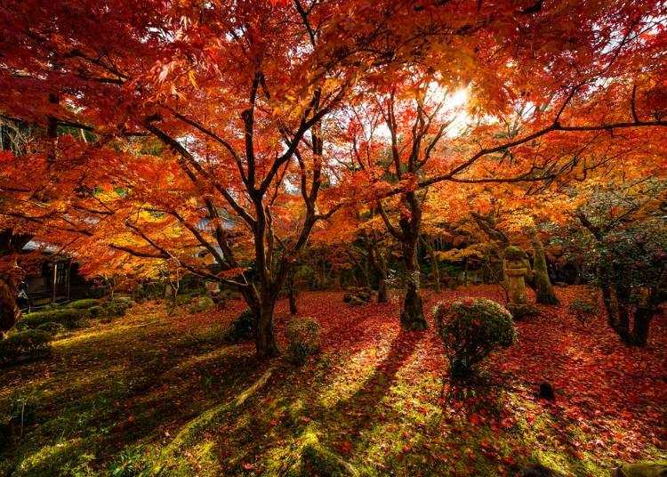 「京都」の紅葉と川辺でビールは最高でした(アメリカ/男性)