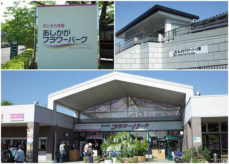Enjoying Ashikaga Flower Park Throughout the Year