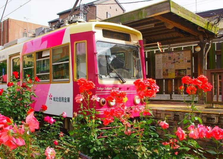 Enjoy a Ride Through Retro Tokyo: Rose Viewing on the Tokyo Sakura Tram (Toden Arakawa Line)!
