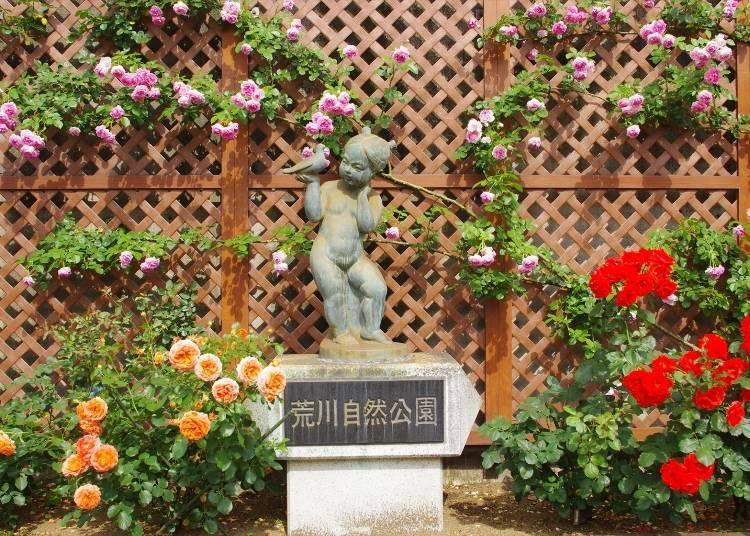 "Rose Viewing Spot #2: Rose-Lined Park Road, ""Arakawa Ni-Chome"""