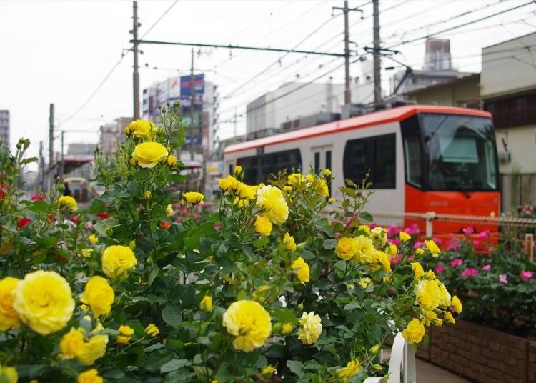 バラスポット4)停留場前の花壇は必見の「町屋駅前」