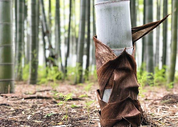 Taking Photos of Bamboo: Photo Tips