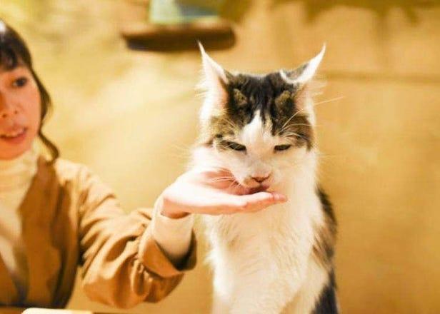 도쿄 볼거리 - 키치죠지(기치조지)에 위치한 귀여움 가득한 고양이 카페, 테마리노 우치!