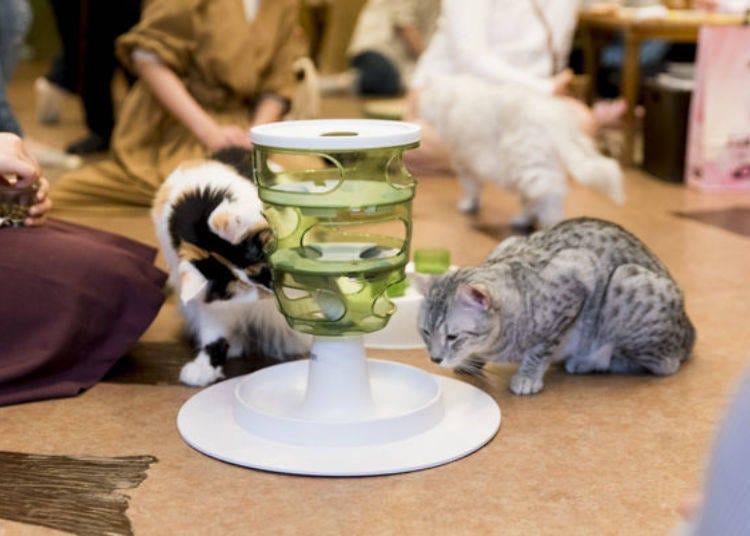 Visiting Tokyo Cat Cafe