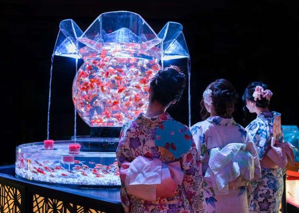 Art Aquarium 2019: Inside Tokyo's Incredible Living Exhibition! (360° Video)