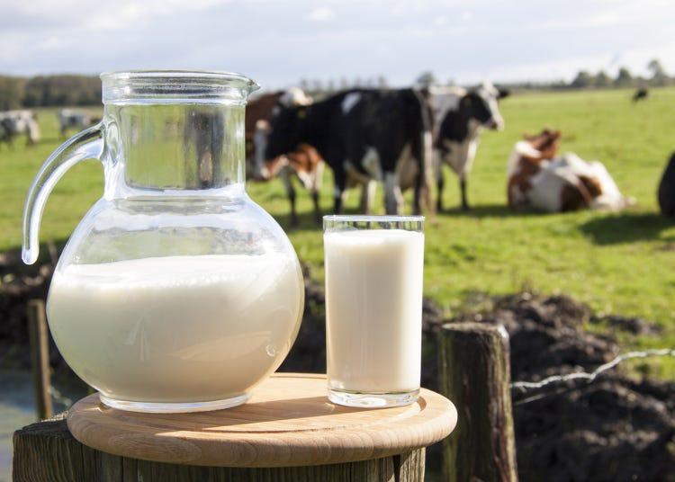 日本&台灣牛奶味道不同是因為?「明治牛奶」濃醇香秘訣大公開
