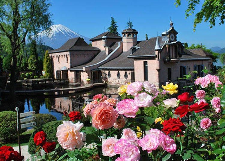 3. Kawaguchiko Music Forest Museum: A Rose Garden Straight Out of a European Fairytale