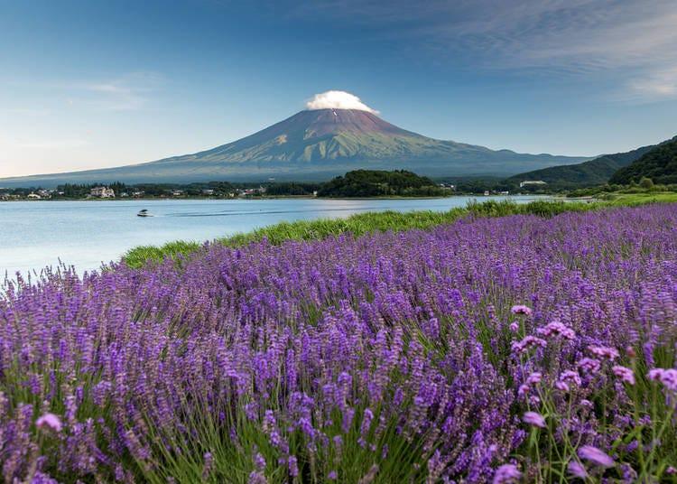 How to get to Mount Fuji - Kawaguchiko from Tokyo