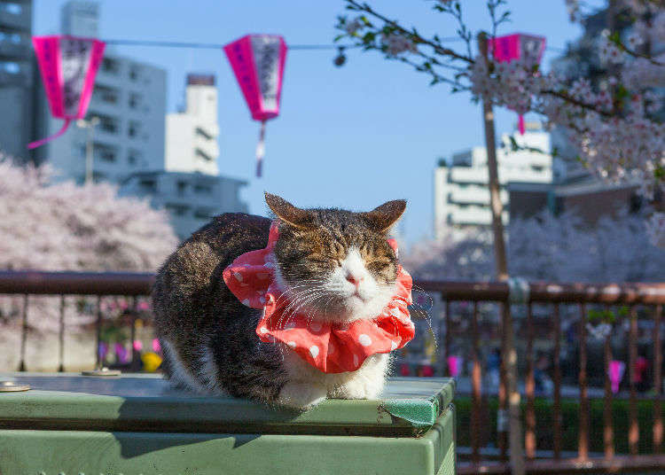 'Don't be a Cat Pooper!' Weird & Hilarious Japanese Animal Phrases We Don't Have in English