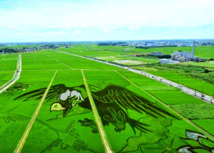 Amazing Rice Paddy Art! Behind the scenes of a unique modern Japanese tradition