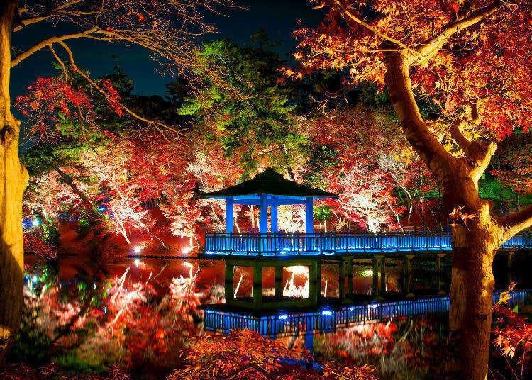 Enjoying Autumn in Japan: Tokyo's Best Autumn Leaf Spots, Lit Up at Night!