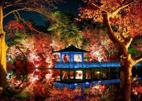 2020東京夜楓景點5選+最佳賞楓期、點燈時間、周邊推薦住宿!