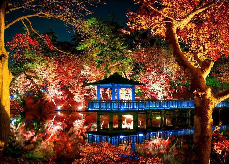 東京夜楓景點①六義園(東京・駒込)