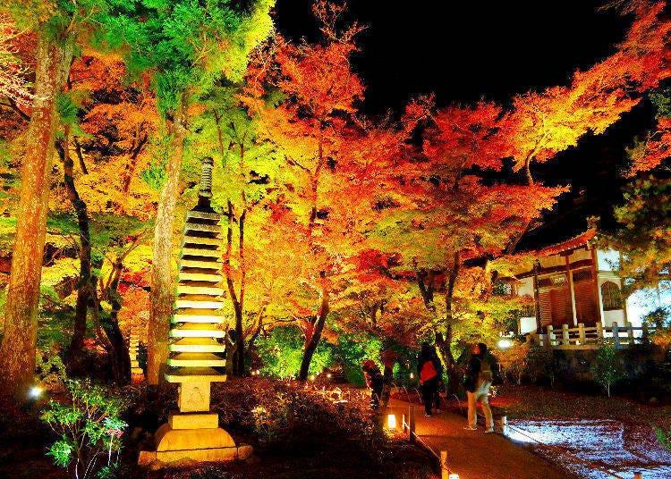 東京夜楓景點②椿山莊庭園(東京・目白)