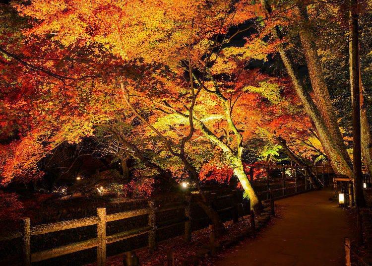 東京夜楓景點④長谷寺(神奈川・鎌倉)