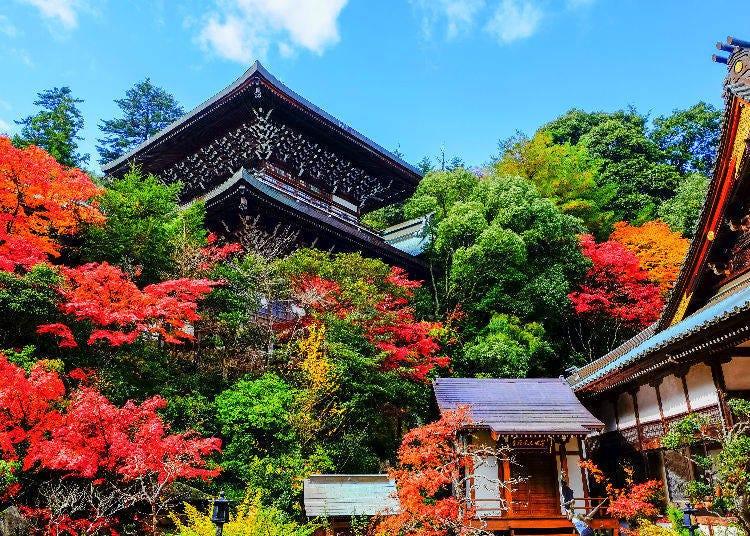 7. Chugoku: Fall Leaves